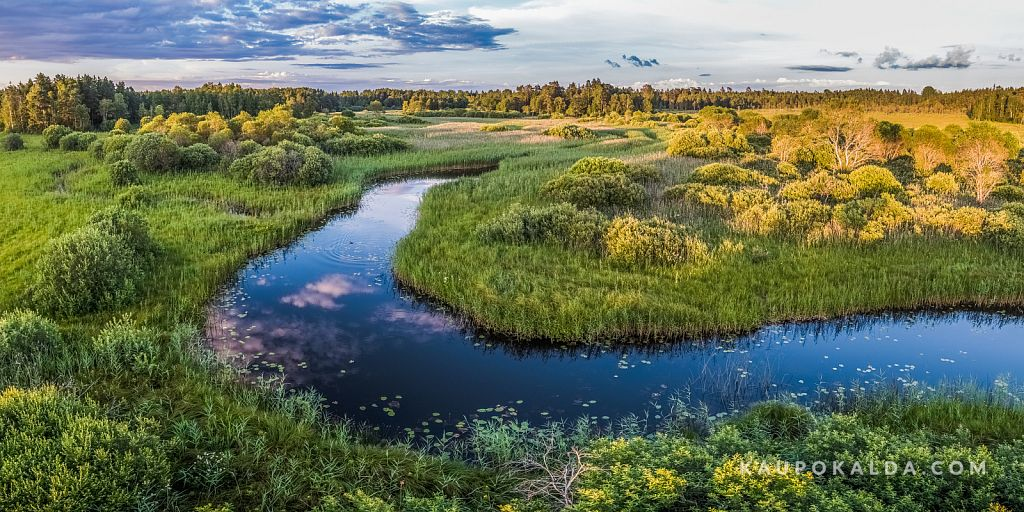 Pajaka Vardi looduskaitseala