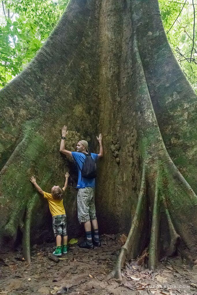 3-pojaga-puud-kallistamas-IMG-6668.jpg